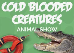 Cold Blooded Creatures Animal Show